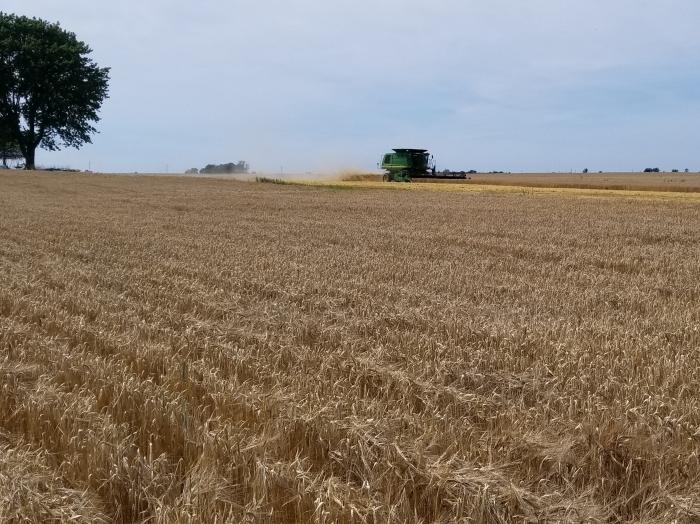 2018 barley harvest.jpg